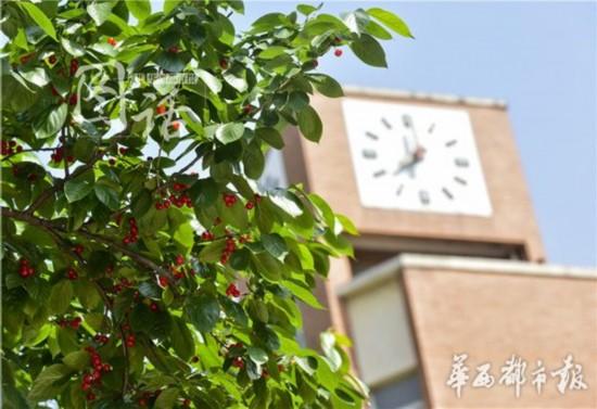 成都华西中学3000多学生过起 樱桃节
